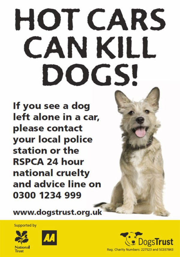 Leaving Your Dog In The Car Uk