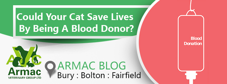 cat save lives by being a blood donor