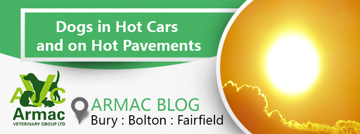 Dogs in hot cars and pavements